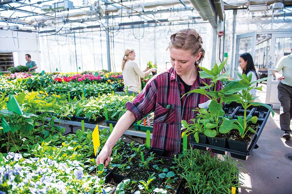 Student organizing plants in a greenhouse on campus.