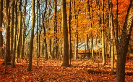 a forest of trees surrounded by orange leaves on the ground