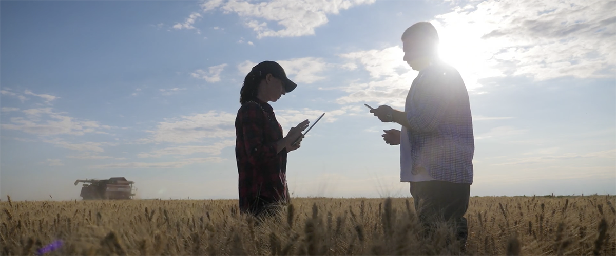 Two people standing in a field as they look at mobile devices.