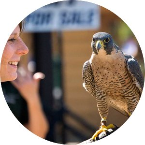 Woman holds a bird of prey at the Raptor Center