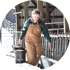 Woman in overalls carries a bucket of feed alongside the sheep barns on the St Paul Campus