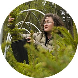 Carrie Pike with spruce subjected to different levels of early spring warming to simulate climate change and its effect on growth.