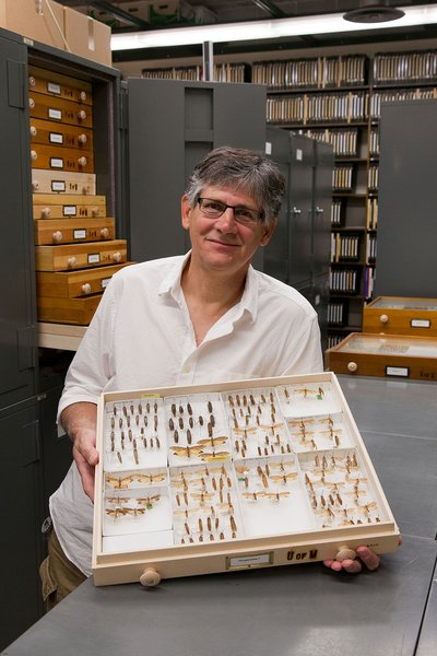Entomology professor Ralph Holzenthal with a glass case of insects in the University's collection.