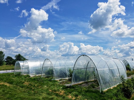 Four campus greenhouses on a partly cloudy day