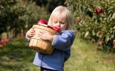 a small blond child carries a small bucket full of apples